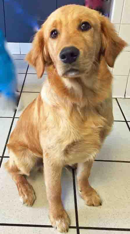Dog Urine On Carpet Shannon Lush Review Home Decor